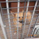 wyłapane psy w Wojanowie oraz  Roszkowie